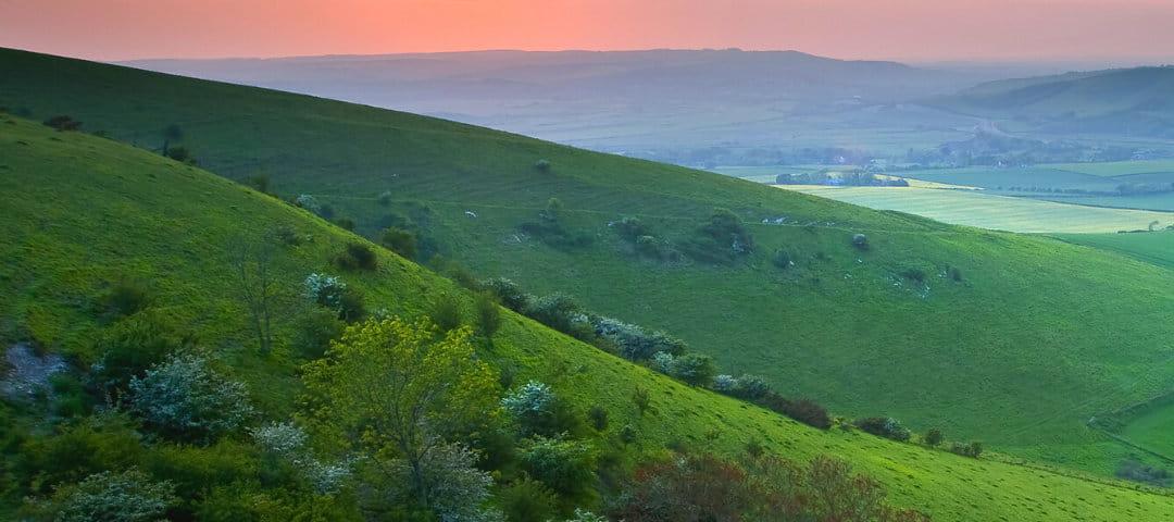 grassy plains at sunset